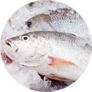 Peixes (5)